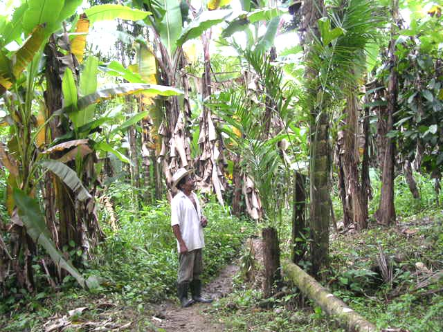 Andres with banana trees