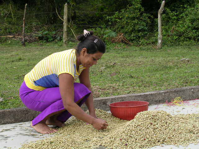 Juana Maria sorting coffee